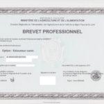 Brevet professionnel éducateur canin comportementaliste loire atlantique Nantes 44