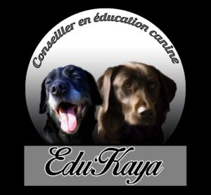 Educateur canin Nantes, Comportementaliste Nantes, dresseur chien, dresseur chiot, 44, Loire Atlantique, Carquefou