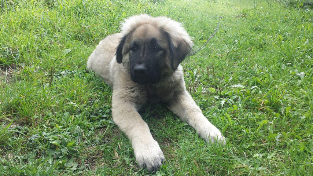 Chien stérilisé, chien castré, comportement chien, éducateur canin, Nantes, comportementaliste, 44
