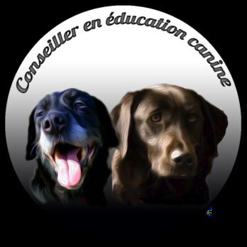 Edukaya éducateur canin Ancenis Loire Atlantique comportementaliste